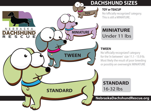 Dachshund Coat Colors Patterns Nebraska Dachshund Rescue